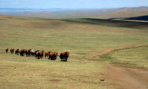 Zdjecie MONGOLIA / Gobi / Mongolia / Konie na stepie