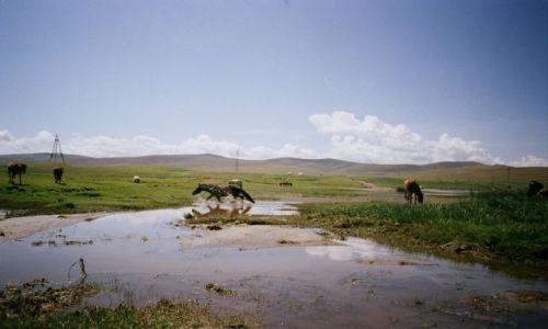 Zdjecie MONGOLIA / Mongolia / Mongolia / Dzikie konie