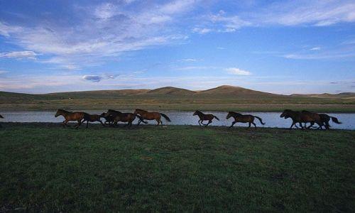 Zdjęcie MONGOLIA / brak / Północna Mongolia / konie
