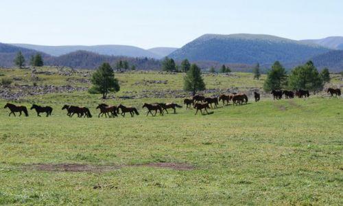 Zdjęcie MONGOLIA / - / Park Siedmiu Jezior / Konie na stepie