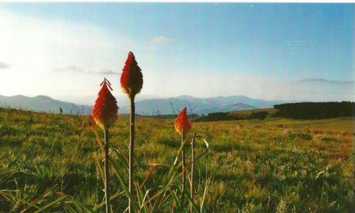Zdjęcie MOZAMBIK / Środk. Mozambik / Góry Chimanimani / Kwiaty i góry