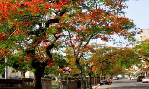 Zdjęcie MOZAMBIK / Maputo / Stolica Mozambiku  / WIOSNA w Maputo