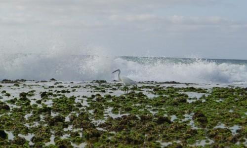 Zdjecie MOZAMBIK / Poł. - wschodni Mozambik  / Zatoka Tofo / Poranny spacer nad oceanem