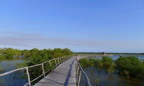 Zdjęcie MOZAMBIK / Poł. - wschodni Mozambik  / Zatoka Tofo / las namorzynowy  / Pomost do raju