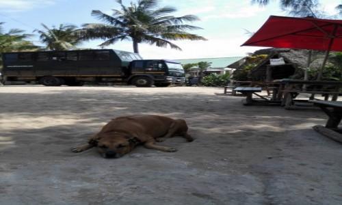 Zdjecie MOZAMBIK / Poł. - wschodni Mozambik  / Kemping  Tofo / Pilnuje naszego auta