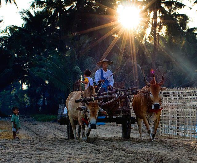 Zdjęcia: Ngapali, Rakhine, zycie na plazy, MYANMAR