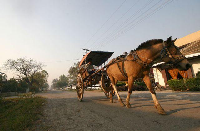 Zdjęcia: NYAUNGSHWE, nad jez.Inle, ......Wio koniku..., MYANMAR