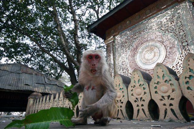 Zdjęcia: Swiątynia na Górze Popa, Przed wjazdem do BAGAN, Złośnica, MYANMAR