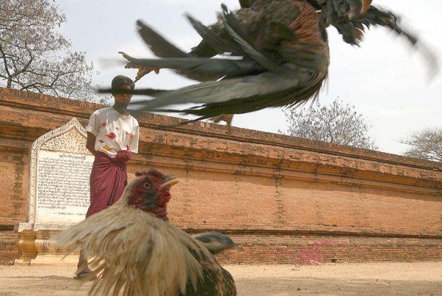 Zdj�cia: YANGON, Do pierwszej krwi, MYANMAR
