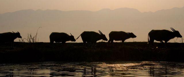 Zdjęcia: Jezioro INLE, ***, MYANMAR