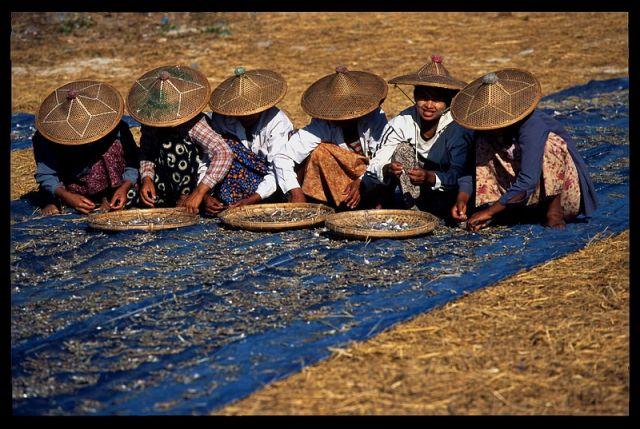Zdjęcia: Ngapali, Birma 2, MYANMAR