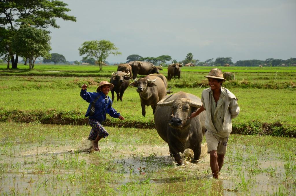 Zdjęcia: Bago, Bago, Dzieci i bydło, MYANMAR