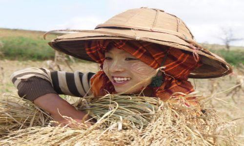 Zdjęcie MYANMAR / Birma / OKOLICE KALAW / ZBIORY RYŻU