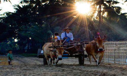 Zdjęcie MYANMAR / Rakhine / Ngapali / zycie na plazy