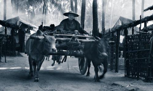 Zdjecie MYANMAR / Rakhine / Ngapali / Czas sie zatrzymal