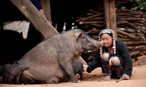 Zdjecie MYANMAR / SHAN EAST  / Okolice Kengtung  / W wiosce Akha