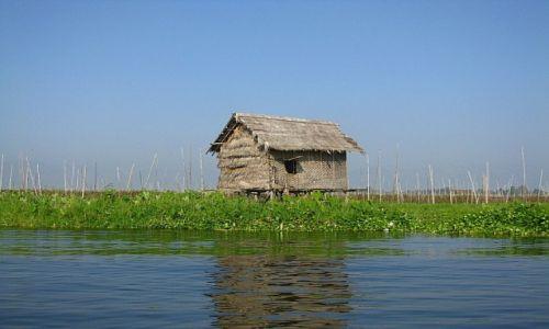 Zdjecie MYANMAR / stan Shan / jezioro Inle / pola uprawne na Inle