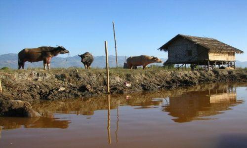 Zdjecie MYANMAR / stan Shan / okolice jeziora Inle / wycieczka canoe po kanałach
