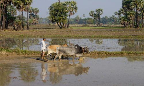 Zdjecie MYANMAR / okolice Bago / okolice Bago / Prace polowe