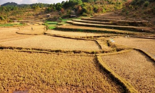 Zdjecie MYANMAR / - / Kalaw / Trekking w okolicach Kalaw