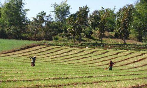 Zdjęcie MYANMAR / stan Shan / okolice Kakku / prace polowe