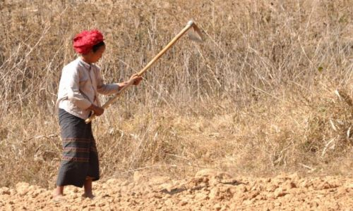 Zdjęcie MYANMAR / Shan / Shan  / W polu