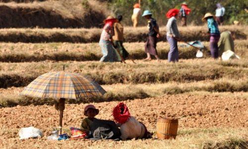 Zdjęcie MYANMAR / Shan / Shan  / W polu 3
