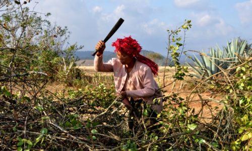 Zdjęcie MYANMAR / Shan / Shan  / Przy żywopłocie