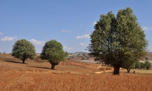 Zdjęcie MYANMAR / Shan / Shan  / Spacer 1