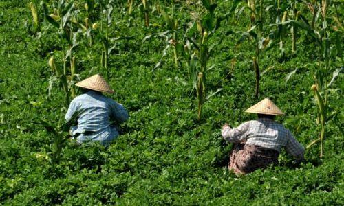 Zdjęcie MYANMAR / Shan / Shan  / Na wsi