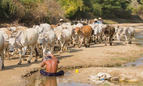 Zdjecie MYANMAR / na wsi / na wsi / Toaleta