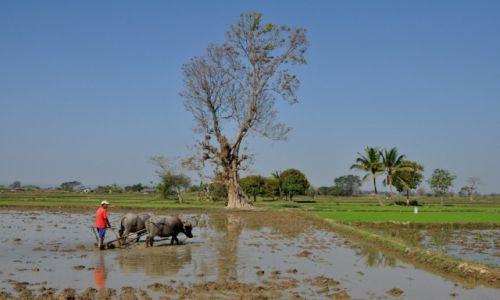 Zdjecie MYANMAR / gdzieś w trasie / gdzieś w trasie / Na polu ryżowym