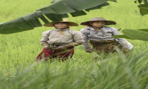 Zdjęcie MYANMAR / Inle / Nyaungshwe / Na polu ryżowym