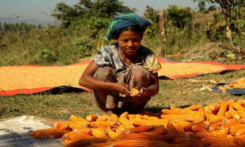 Zdjęcie MYANMAR / Inle Lake / wieś  / Owad