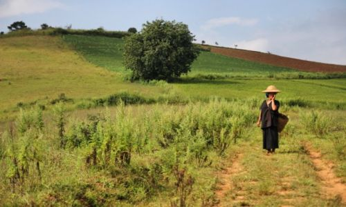 Zdjecie MYANMAR / Shan State / Shan State / Kobieta z plemienia Pa O