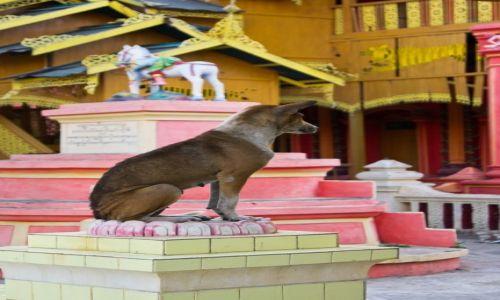 Zdjecie MYANMAR / Monywa / Monywa / :-)))