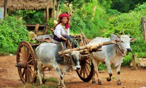 Zdjecie MYANMAR / Kalaw / Kalaw / droga do pracy