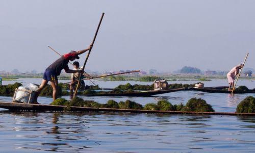 Zdjęcie MYANMAR / Inle Lake / Inle Lake / Poławiacze glonów