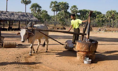 Zdjęcie MYANMAR / Monywa District / po drodze / Tłoczenie oleju