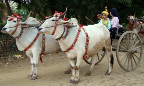Zdjecie MYANMAR / - / - / W drodze do klasztoru
