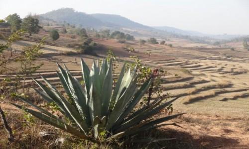 Zdjecie MYANMAR / Shan / treking z Kalaw nad Inle / terasy w porze suchej