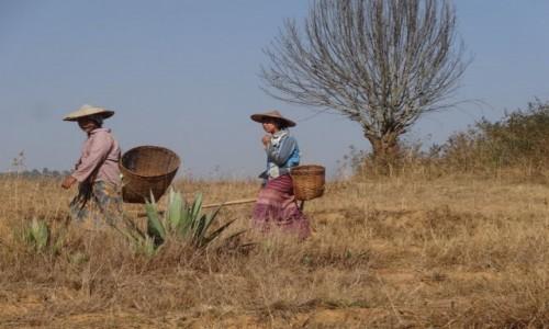 Zdjecie MYANMAR / Shan / treking z Kalaw nad Inle / w drodze do pracy