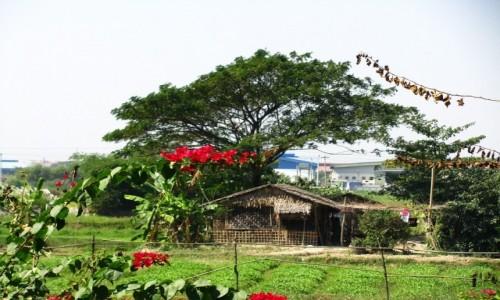 Zdjecie MYANMAR / Yangon / Yangon / przedmieścia Yangonu