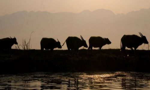 Zdjecie MYANMAR / brak / Jezioro INLE / ***