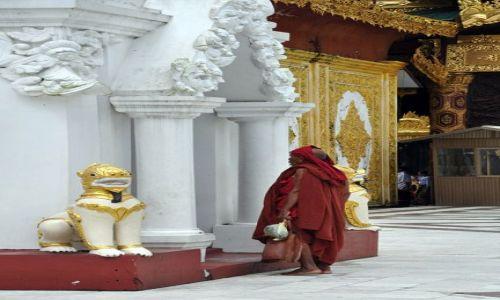 MYANMAR / brak / Yangon (Rangun) / Mnich na terenie Shwedagon Paya