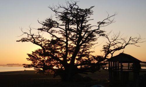 Zdjęcie MYANMAR / Mandalay / Amarapura / ... Bo? ... Drzewo Bo?....