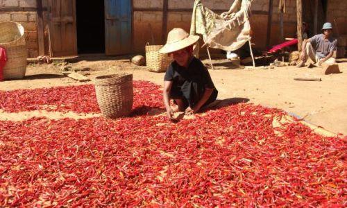 Zdjęcie MYANMAR / Okolice jeziora Inle / gdzieś pomiędzy Kalaw a Nyaungshwe / ... czerwona i ostra... jest wszędzie ....