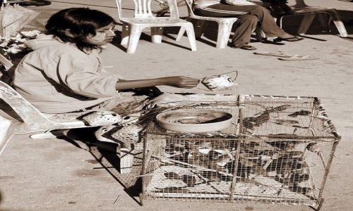 Zdjęcie MYANMAR / Golden Triangle / brak / komu ptaszka?