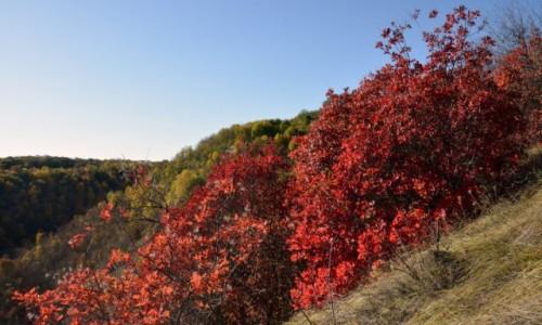 Zdjecie NADDNIESTRZE / Naddniestrze / Rezerwat przyrody Largolic / Naddniestrzańska jesień