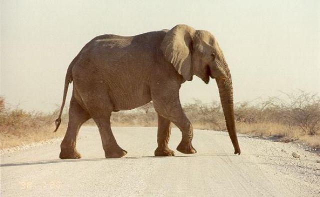Zdjęcia: Etosha Park, Namibia, Etosha, NAMIBIA
